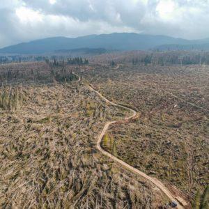 difesa fitosanitaria e tempesta VAIA