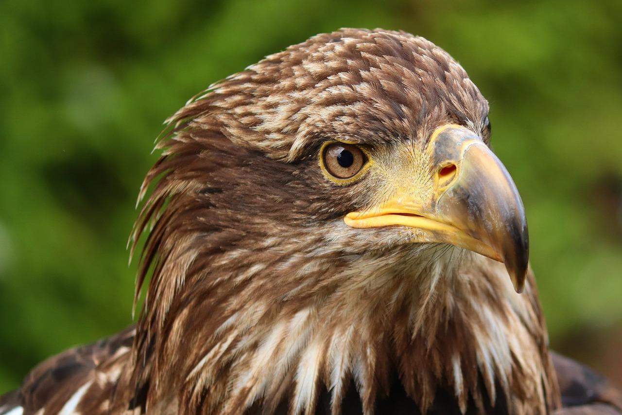 biodiversità Giornata mondiale della fauna selvatica