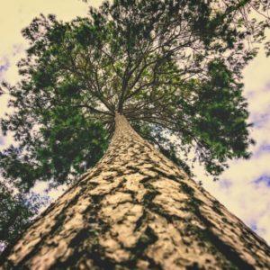 riforestazione urbana: contrastare i cambiamenti climatici