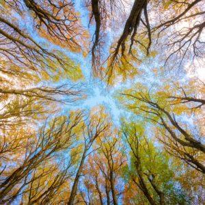 Progettazione forestale: la trasformazione del bosco