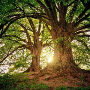 censimenti delle alberate, alberi monumentali