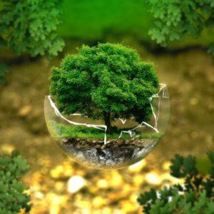 gestione servizi ambientali giornata mondiale dell'ambiente