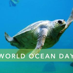scopri di più sul nostro blog dedicato alla sostenibilità , alla gestione ambientale e green economy ocean day